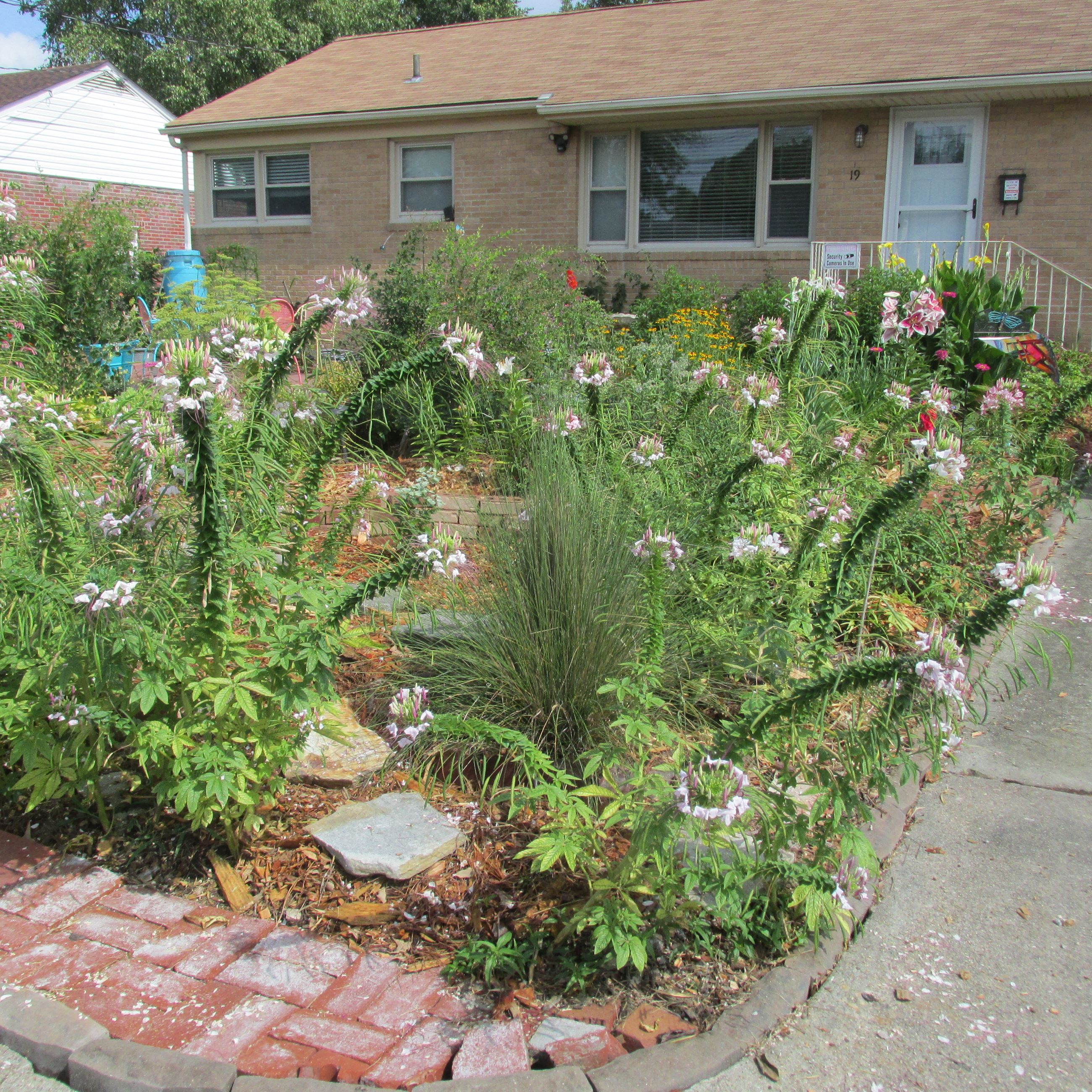 Pollinator friendly yard of the year